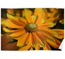 Sunshine in my Garden Poster