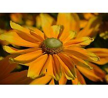 Sunshine in my Garden Photographic Print