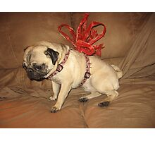 Pug with a Bow Photographic Print