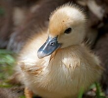 HELLO I'M JUST A YOUNGSTER by TJ Baccari Photography