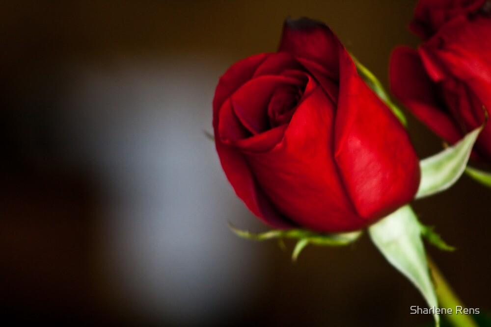 Red Rose by Sharlene Rens