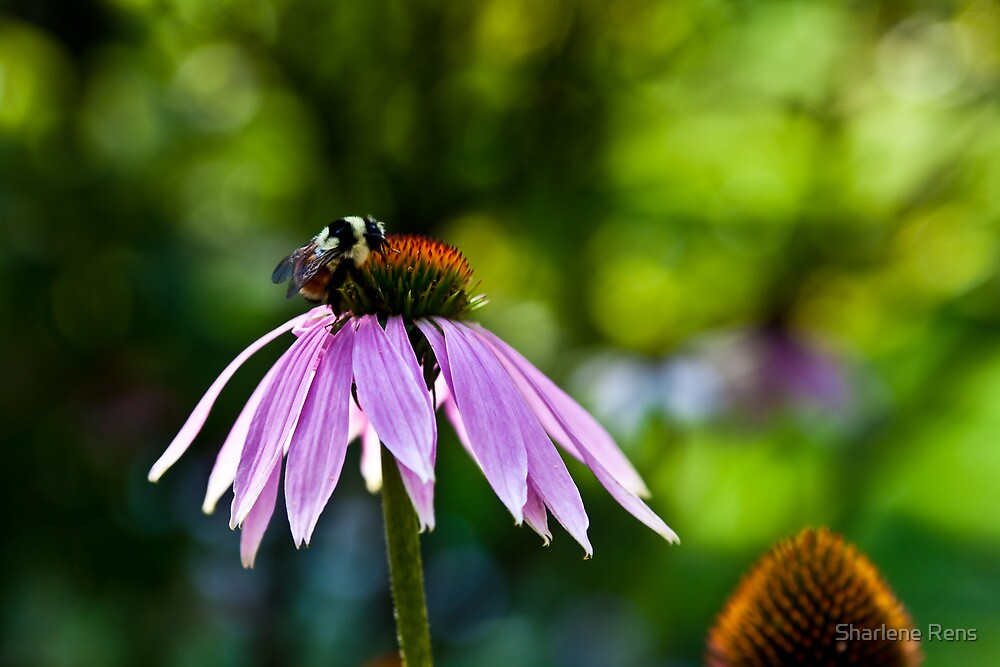 Busy Bumble Bee by Sharlene Rens
