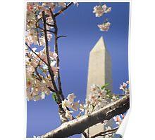Framing Washington with Blossoms Poster