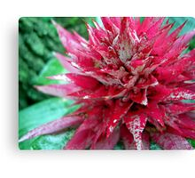 Tough-as-Nails Pink Canvas Print