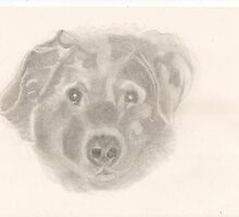 JADE FOR SHERRI - sketch 1 in Series of friends pets by LadyE