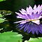 #607  Purple Lotus Flower by MyInnereyeMike