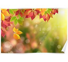 autumn leaves against the sunrays Poster