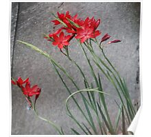 Red Flowers and the Grey Pavement Poster