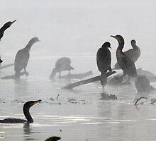 Coromorants on a cold misty floroda winters day by jozi1