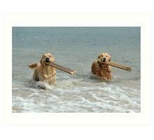 Golden Retrievers - retrieving sticks Art Print