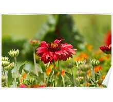 One Open Flower Poster