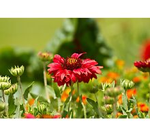 One Open Flower Photographic Print
