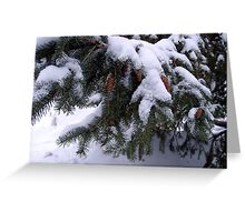 Snow On Pine Greeting Card