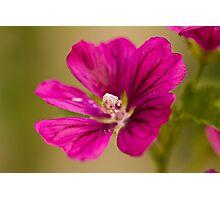 Purple Glory Photographic Print