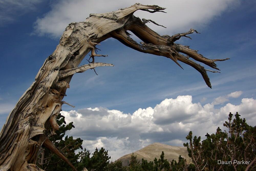 Windy Ridge by Dawn Parker