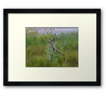 Hanging Beauty. Framed Print