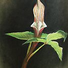 Jack in the Pulpit by Justin Overholt