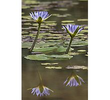 Lily Reflection Photographic Print