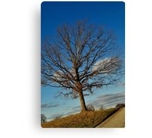 Though a tree grows so high, the falling leaves return to the root. Canvas Print