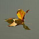 Leaf Reflection by Philip Alexander