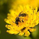Coated in Pollen by Philip Alexander