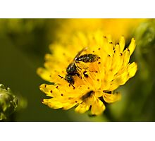 Coated in Pollen Photographic Print