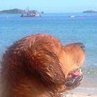 Scilly seadog by durzey