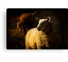 Graveside Sheep Canvas Print