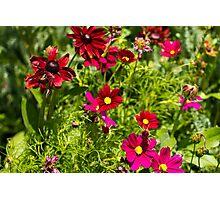 The Flower Garden Photographic Print
