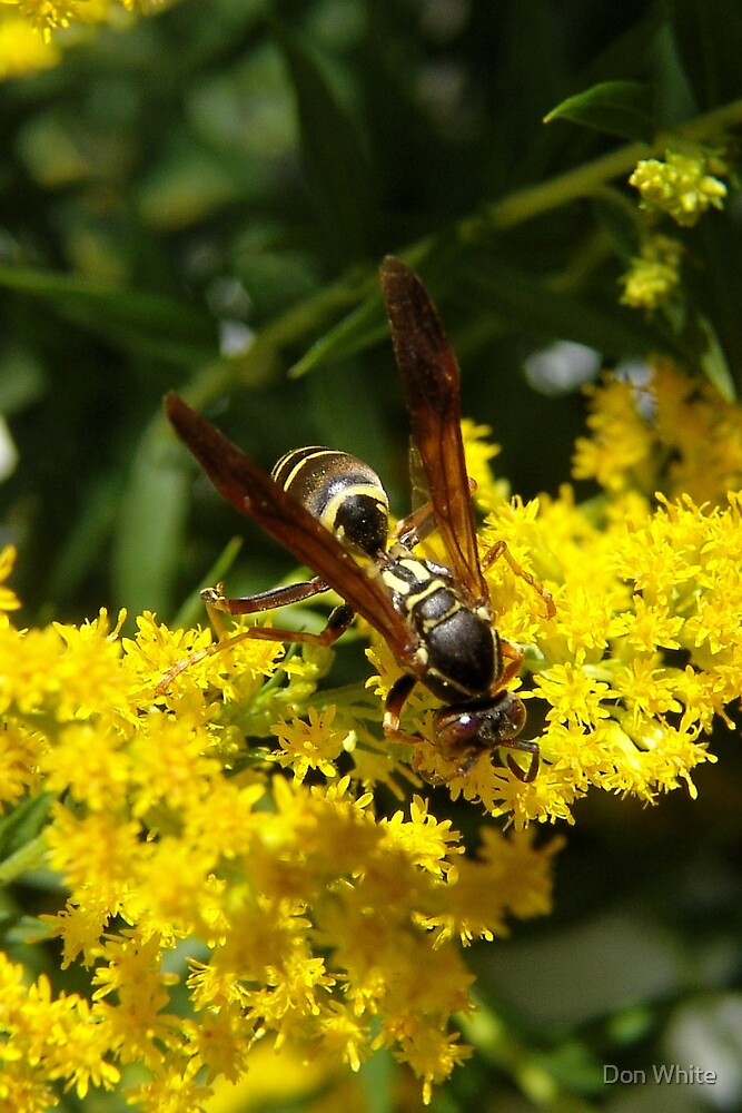 Wasp Checking Out The Goldenrod by Don White