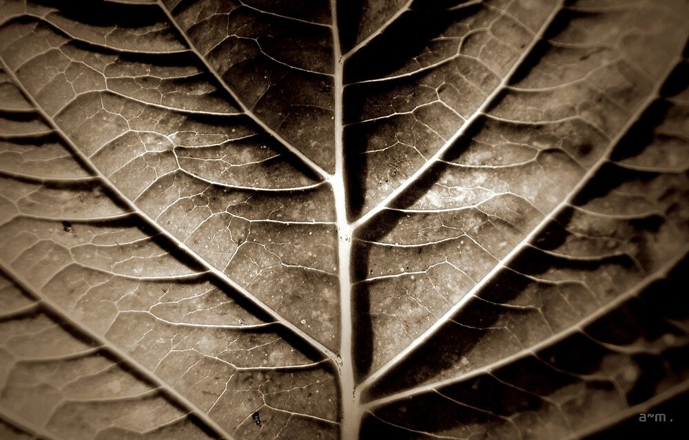 ~The Fall of a Leaf...~ by a~m .