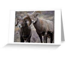 Affectionate Rams Greeting Card