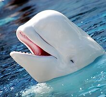 Adorbz Beluga Whale by cute-wildlife
