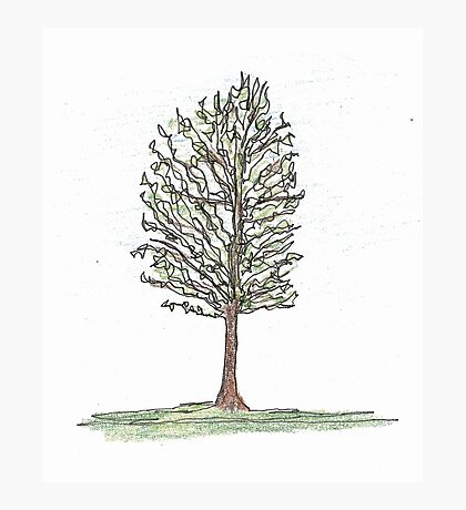 spring tree Photographic Print