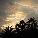 Florida Sunset ~ January 5, 2011 by Debbie Robbins