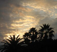 Florida Sunset ~ January 5, 2011 by Debbie Robbins