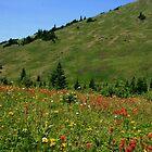colorful alpine meadows by vernonite