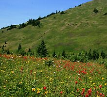 colorful alpine meadows by vernonite