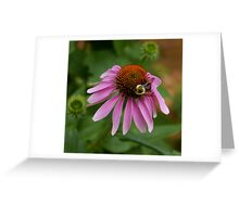 cornering a coneflower Greeting Card