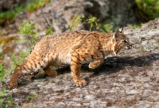 On the Prowl by J. Day