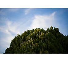 Crisp Green Photographic Print