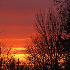 Blazing Winter Skies by Bonnie Robert