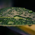 Rain Drops by mike35400