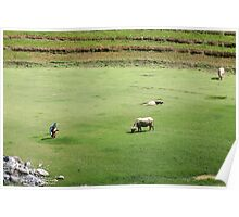 A Green Free Field in Sapa Poster