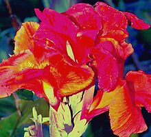 Bright reddish orange canna lily by ♥⊱ B. Randi Bailey