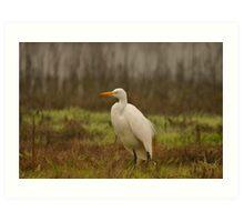 Egret in the Wetlands Art Print