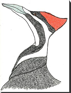 pileated woodpecker by dthaase