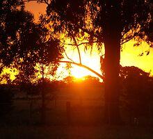 Golden Sunset  by Jessica Hooper