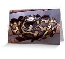 Morelia spilota variegata - North Western Carpet Python Greeting Card