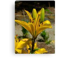 Flower in Mount Dandenong Canvas Print